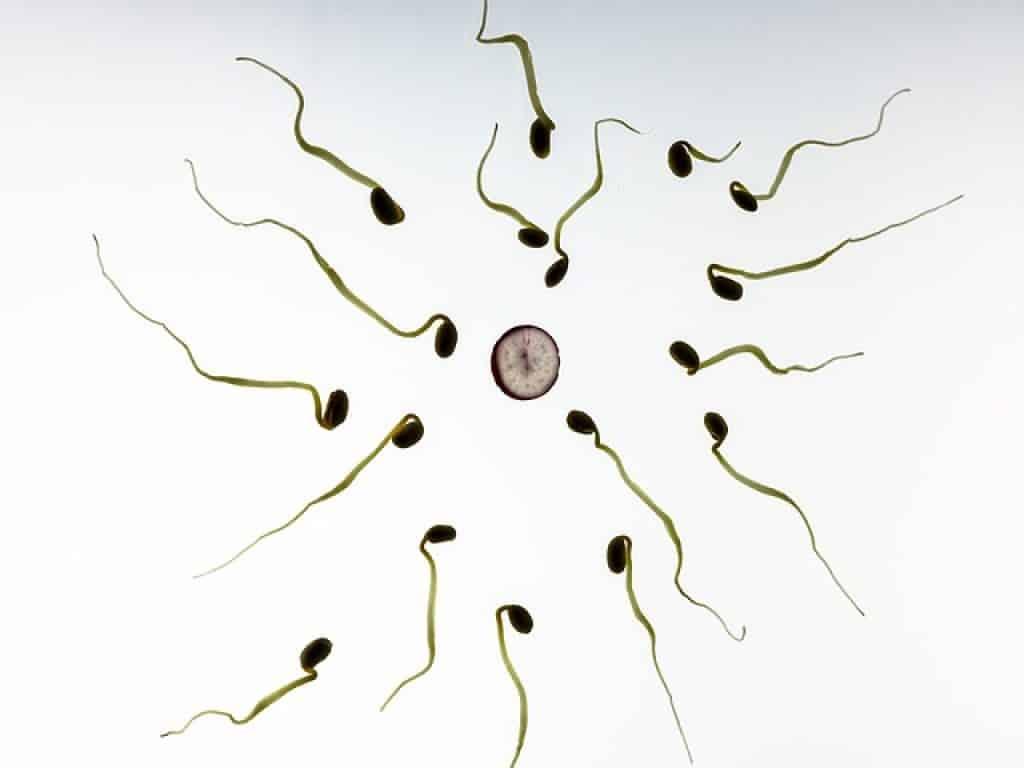 Calculer les SA de grossesse vous demandera de vous souvenir de la date du début de vos dernières règles
