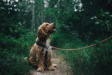 Les bienfaits du chien pour la santé