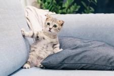 Quelles plantes naturelles peuvent repousser naturellement les chats ?