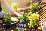 Jardin : comment faire une remise en état ?